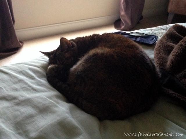Caty-Mornings