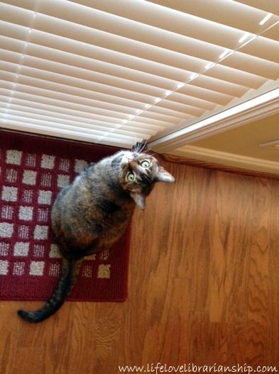 Caty-Outside