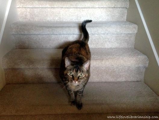 Caty-Stairs