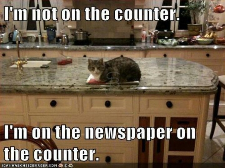 lolcat newspaper counter