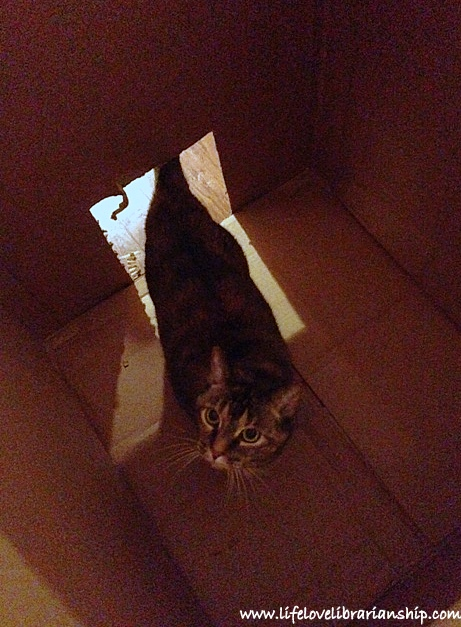 Caty loves the box it came in