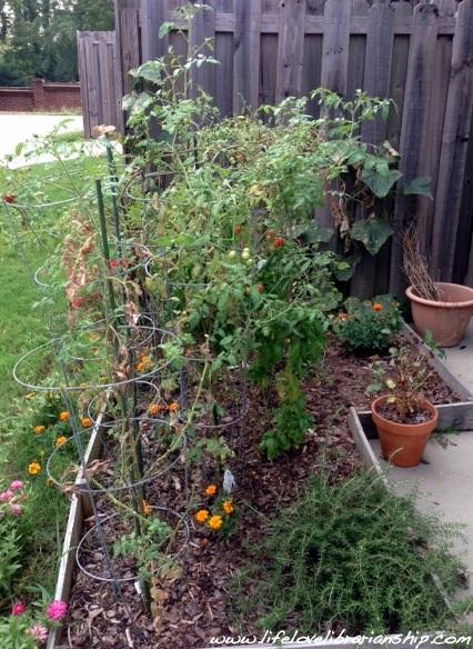 Garden_August2
