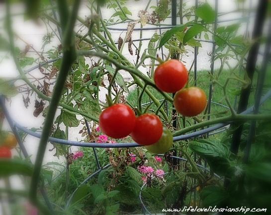 Garden_August3