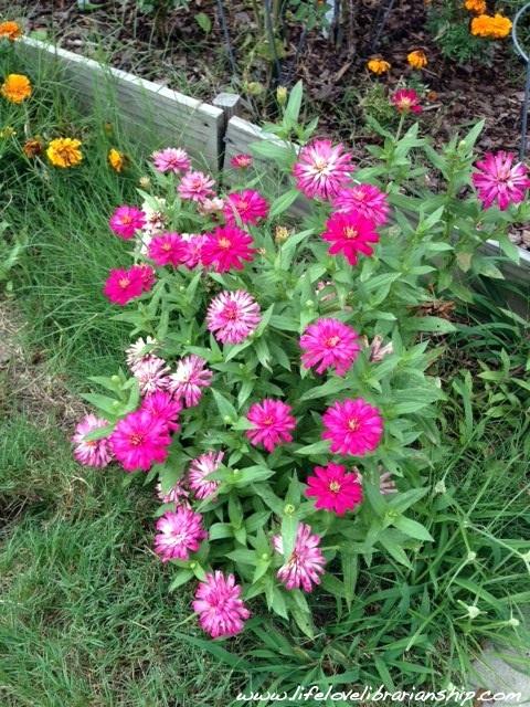 Garden_August4